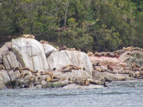 Sea lions, Patagonia
