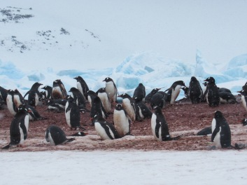Penguins and snow