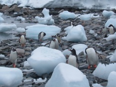 Penguins and ice cubes