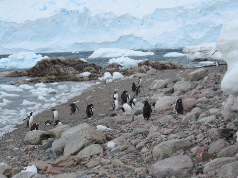Penguins on the beach