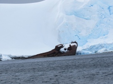 Wreck of an old whaling ship
