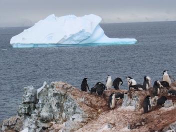 Penguins and iceberg