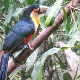 Toucan 2
