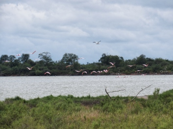 Chaco water birds 4
