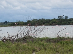 Chaco water birds 5