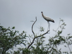 Chaco water birds 2