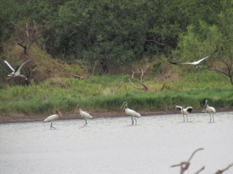 Chaco water birds 3
