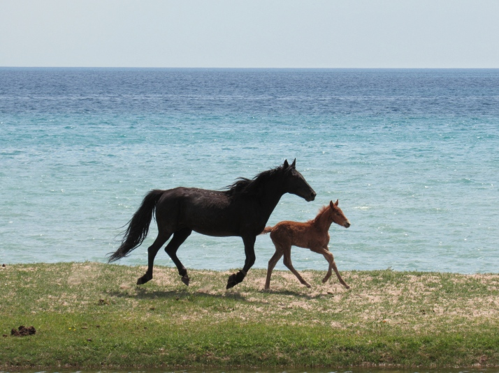 Mare and foal Issyk-Kul